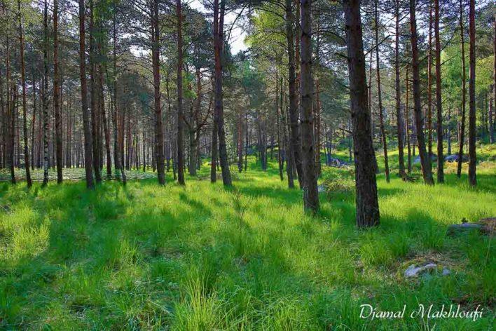 Forêt de Fontainebleau - Gorges d'Apremont