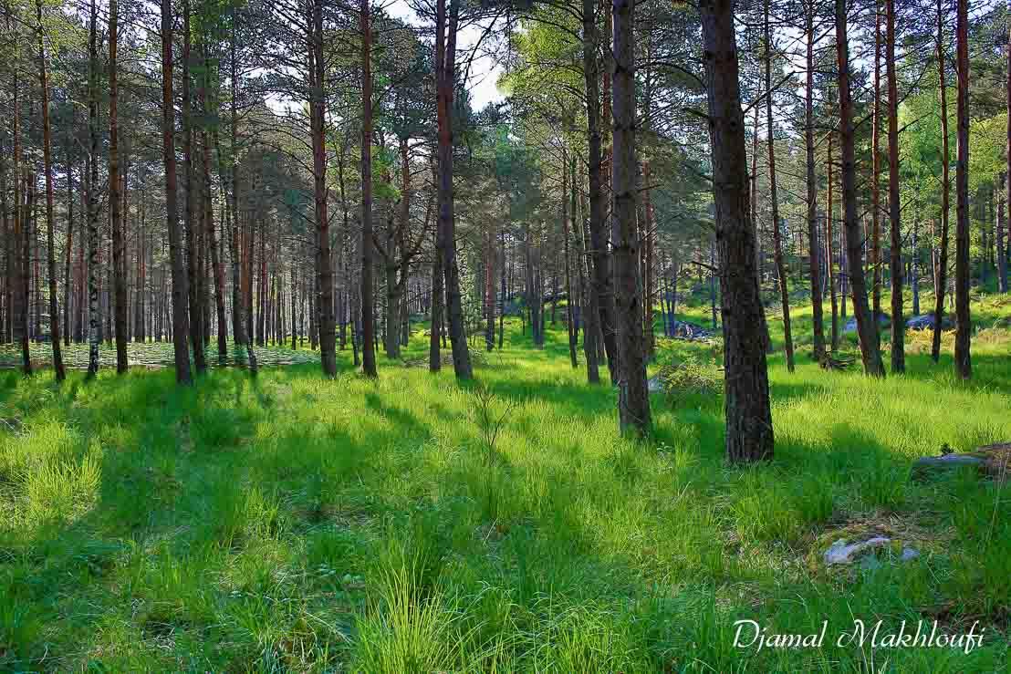 Gorges d'Apremont - Forêt de Fontainebleau
