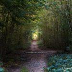 bout du tunnel (paysages de la forêt de Fontainebleau)