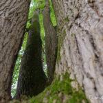 entrevue (paysages de la forêt de Fontainebleau)