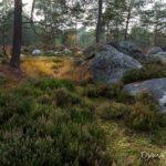 lande et grès (paysages de la forêt de Fontainebleau)