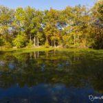 mare aux évées (paysages de la forêt de Fontainebleau)
