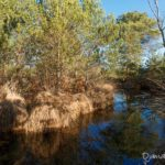 Mare aux sangliers (paysages de la forêt de Fontainebleau)