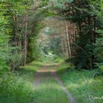 paysage forestier (paysages de la forêt de Fontainebleau)