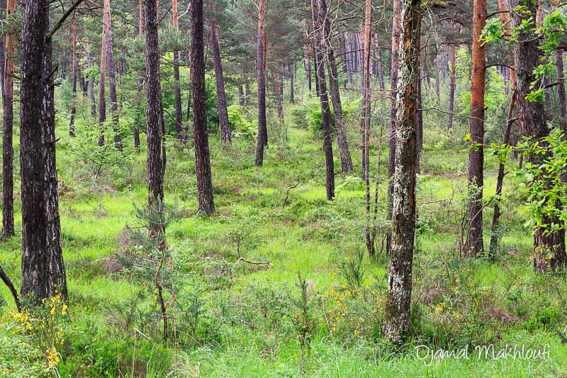 Paysages de la forêt de Fontainebleau - Galerie photo