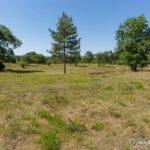 plaine de Macherin (paysages de la forêt de Fontainebleau)
