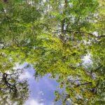 reflet mare aux cerfs (paysages de la forêt de Fontainebleau)