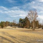 sable du cul du chien (paysages de la forêt de Fontainebleau)