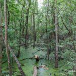 ENS de Sorques (paysage de la forêt de Fontainebleau)