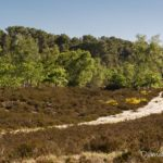 Vallée chaude (paysages de la forêt de Fontainebleau)