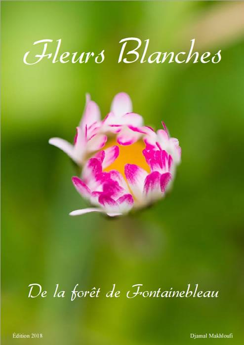 Fleurs blanches sauvages de la forêt de Fontainebleau